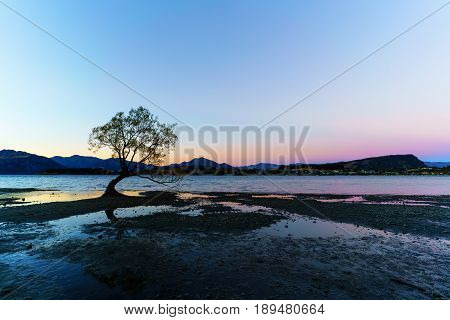 The famous lone tree of lake Wanaka is located at the foothills of Mount Aspiring National Park a World Heritage Site in twilight Wanaka South Island of New Zealand