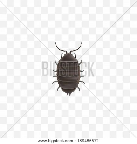 Realistic Bug Element. Vector Illustration Of Realistic Dor Isolated On Clean Background. Can Be Used As Dor, Bug And Beetle Symbols.