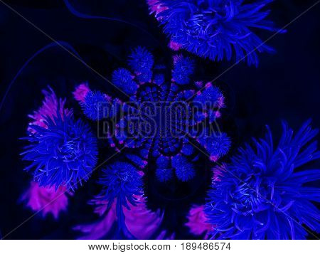 Aster flower. Repeating pattern of blue flowers on a dark background. A pattern of dark blue flowers. Pink shades on blue and black. background.