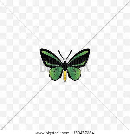 Realistic Beauty Fly Element. Vector Illustration Of Realistic Tropical Moth Isolated On Clean Background. Can Be Used As Fly, Butterfly And Green Symbols.