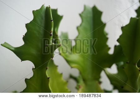 Close up view of real thorny cactus for home gardening concept