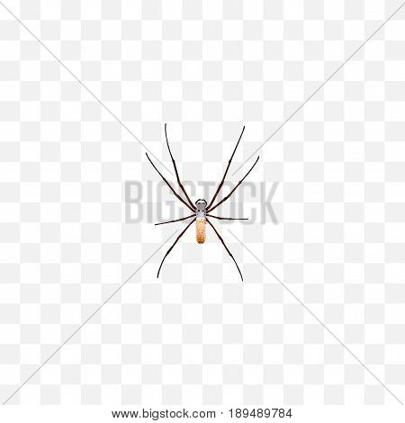 Realistic Arachnid Element. Vector Illustration Of Realistic Spider Isolated On Clean Background. Can Be Used As Spider, Spinner And Arachnid Symbols.