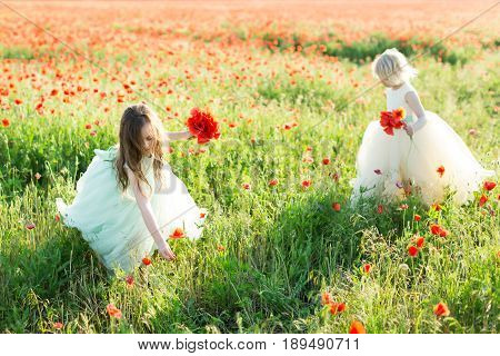 wedding, holidays, freedom, vacation, health, nature concept - two fascinating princesses in sleeveless dresses playing and picking poppies in the field of wild flowers