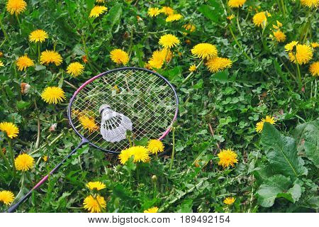 Racket of badminton and shuttlecock on the lawn with dandelions summer sport vacation concept
