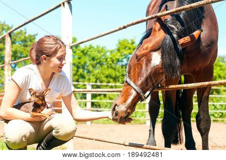 Young cheerful teenage redhead girl feeding her favorite chestnut horse and small dog. Vibrant colored outdoors horizontal image.