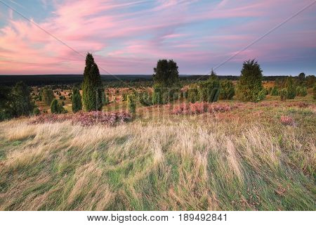 summer sunset over hills with heather and junipers
