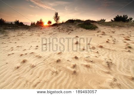 textures on sand dune at sunset in summer