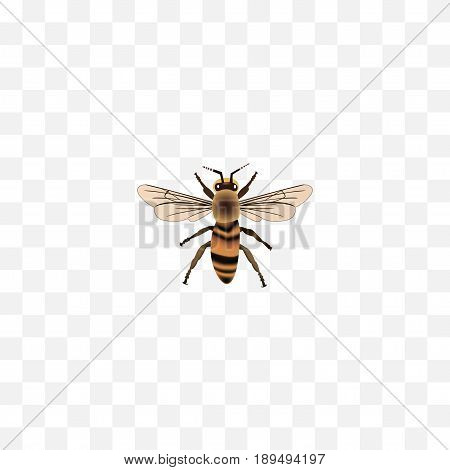 Realistic Housefly Element. Vector Illustration Of Realistic Wasp Isolated On Clean Background. Can Be Used As Housefly, Beetle And Wasp Symbols.
