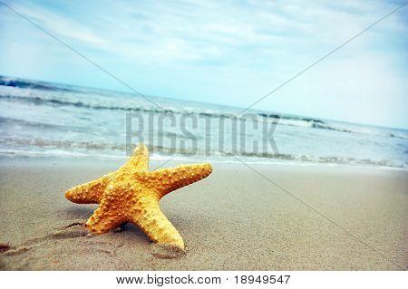 Starfish on the tropical beach