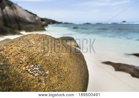 Sea Shells, La Digue, Seychelles