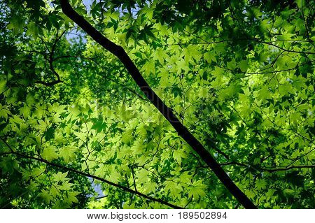Green Trees At Sunny Day In Summer