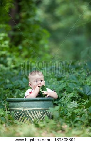 Little boy vegan eating a maple leaf sitting in a basket on a background of green thickets