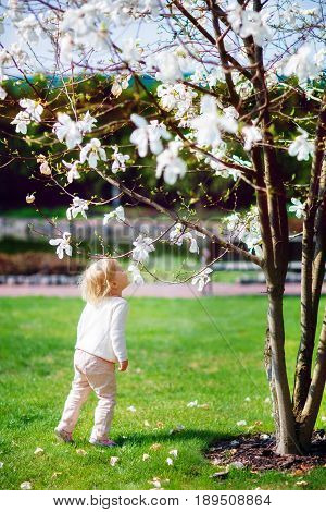 A little girl with pleasure sniffs the scent of a blooming magnolia in a spring park