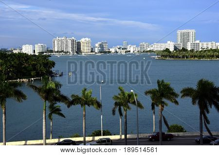 Cityscape of Miami with lots of palm trees
