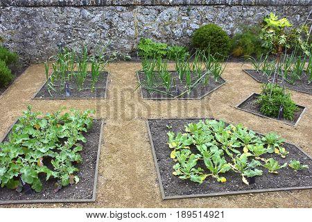 Green Summer Garden in St. Peter Port.Guernsey