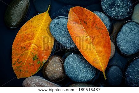 Autumn Season And Peaceful Concepts. Orange Leaf On River Stone . Abstract Background Of Autumn Leaf