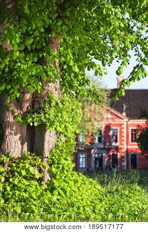 Detail of trunk and leaves of linden tree with old red manor house at the background