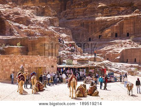Petra Jordan - 9 March 2017: Camels in bedouin camp near ruins in Petra Jordan 9 March 2017