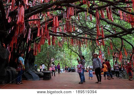 Red Ribbons On Love Tree