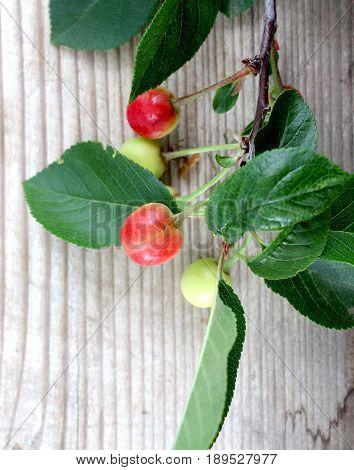 Cherry On Wood Background