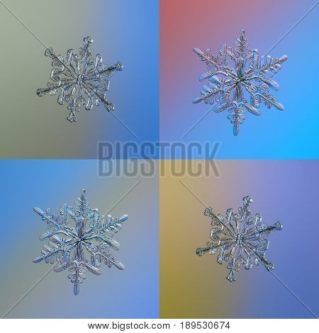 Set with four snowflakes on bright gradient background, arranged as square grid. This is macro photos of real snow crystals: big stellar dendrites with glossy relief surface and complex, elegant arms.
