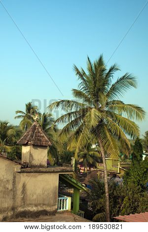 Tropical Landscape With A Palm Tree And A Roof