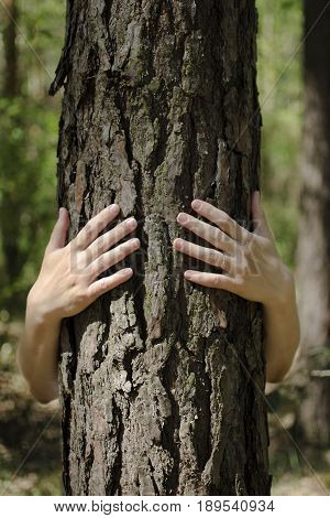 Close-up view of female hands embracing tree trunk in forest