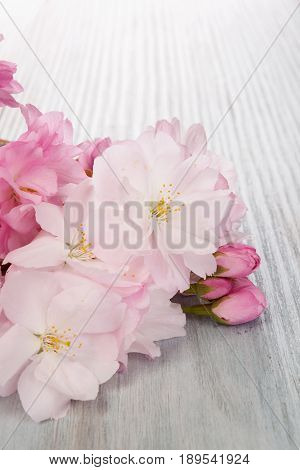 Romantic spring background. Pink flowers on blue wooden background.
