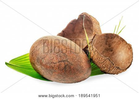 Whole Coconut With Shell And Green Leaf, Close Up