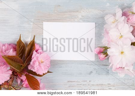 Romantic spring background. Pink flowers on blue wooden background from above with blank label with copyspace.