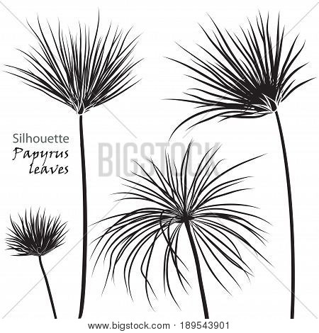 Silhouette tropical palm papyrus leaves black isolated on white background. Vector illustration