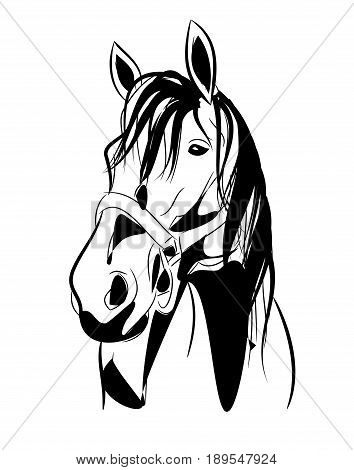 Illustration of horse head with halter on white background