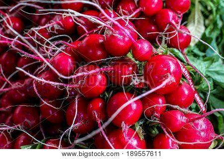 Organically grown radishes