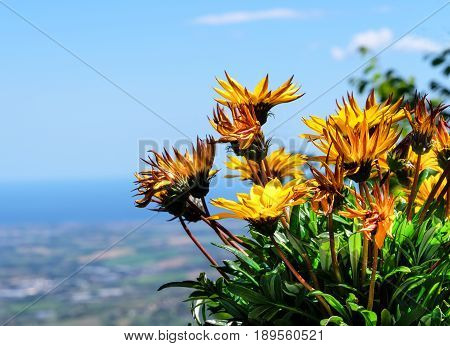 Cluster of chrysanthemum flowers with a soft background