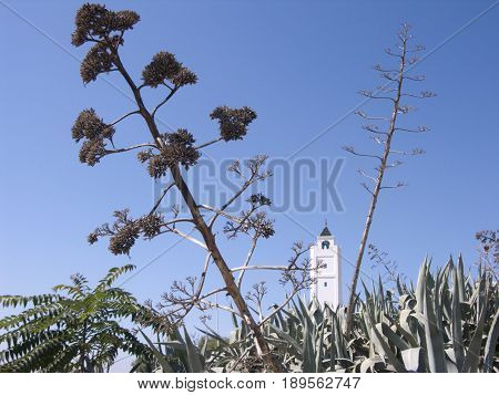 white church tunis with plants in the front
