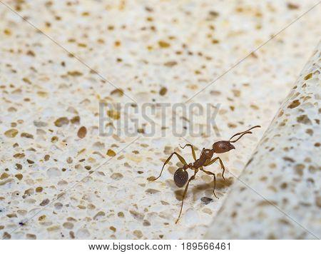 Ant macro nature isolated animal pain background