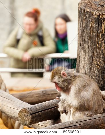Sad monkey in a zoo. On a background indistinct figures of visitors of a zoo. Hands of a monkey and a hand of visitors are crossed equally. Selective focus indistinct background