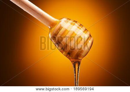 Honey Dipper On Yellow