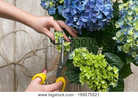 Gardener makes a bouquet of greenhouse flowers. The florist works in a greenhouse with a purple bouquet. Floristic workshop, skill, decor, small business concept