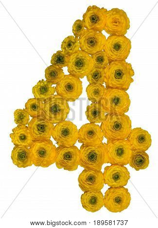 Arabic Numeral 4, Four, From Yellow Flowers Of Buttercup, Isolated On White Background
