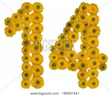Arabic Numeral 14, Fourteen,  From Yellow Flowers Of Buttercup, Isolated On White Background