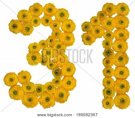 Arabic Numeral 31, Thirty One, From Yellow Flowers Of Buttercup, Isolated On White Background