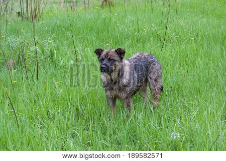 Mongrel Dog Staying Alone In The Grass