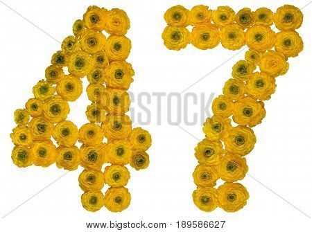 Arabic Numeral 47, Forty Seven, From Yellow Flowers Of Buttercup, Isolated On White Background