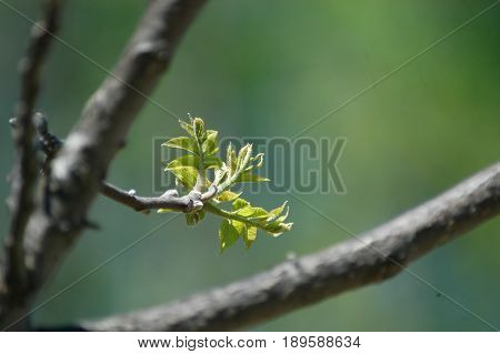 bloom tree leaf  branch  grow green life spring