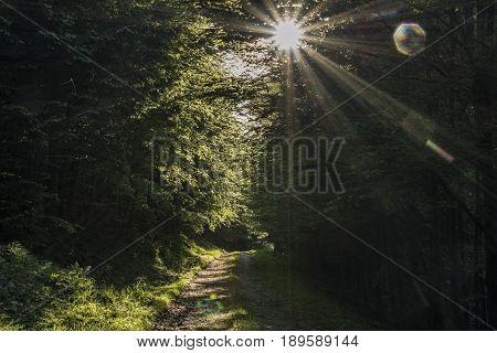 Dark sun on forest path in Jeseniky mountains