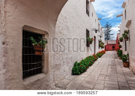 geraniums in the courtyard of the old convent