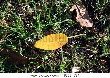 Colorful autumn leaves background with lawn grass. Leaves autumn background. Close up on Autumn Leaves.