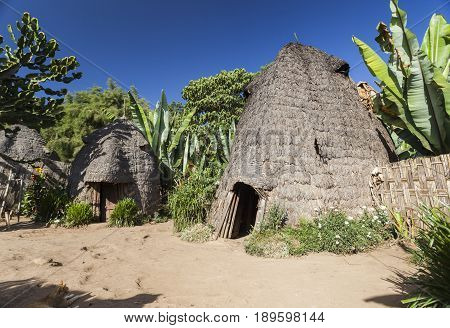 Elephant Head Like Traditional Dorze Houses. Hayzo Village, Omo Valley, Ethiopia