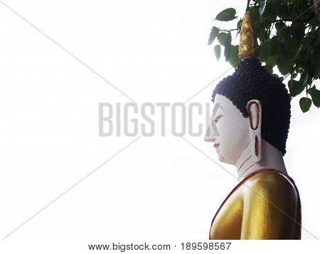 Buddha statue sitting under Bodhi tree with bright white background